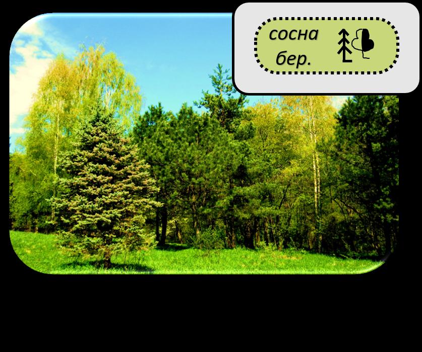 Топографический знак смешанный лес картинки