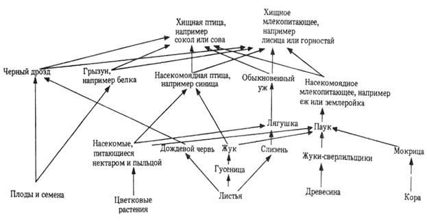 Трофическая сеть