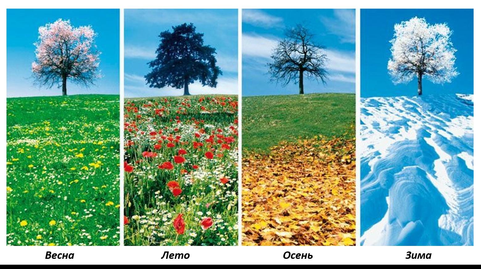 Картинками для сравнения лето и осень участник может