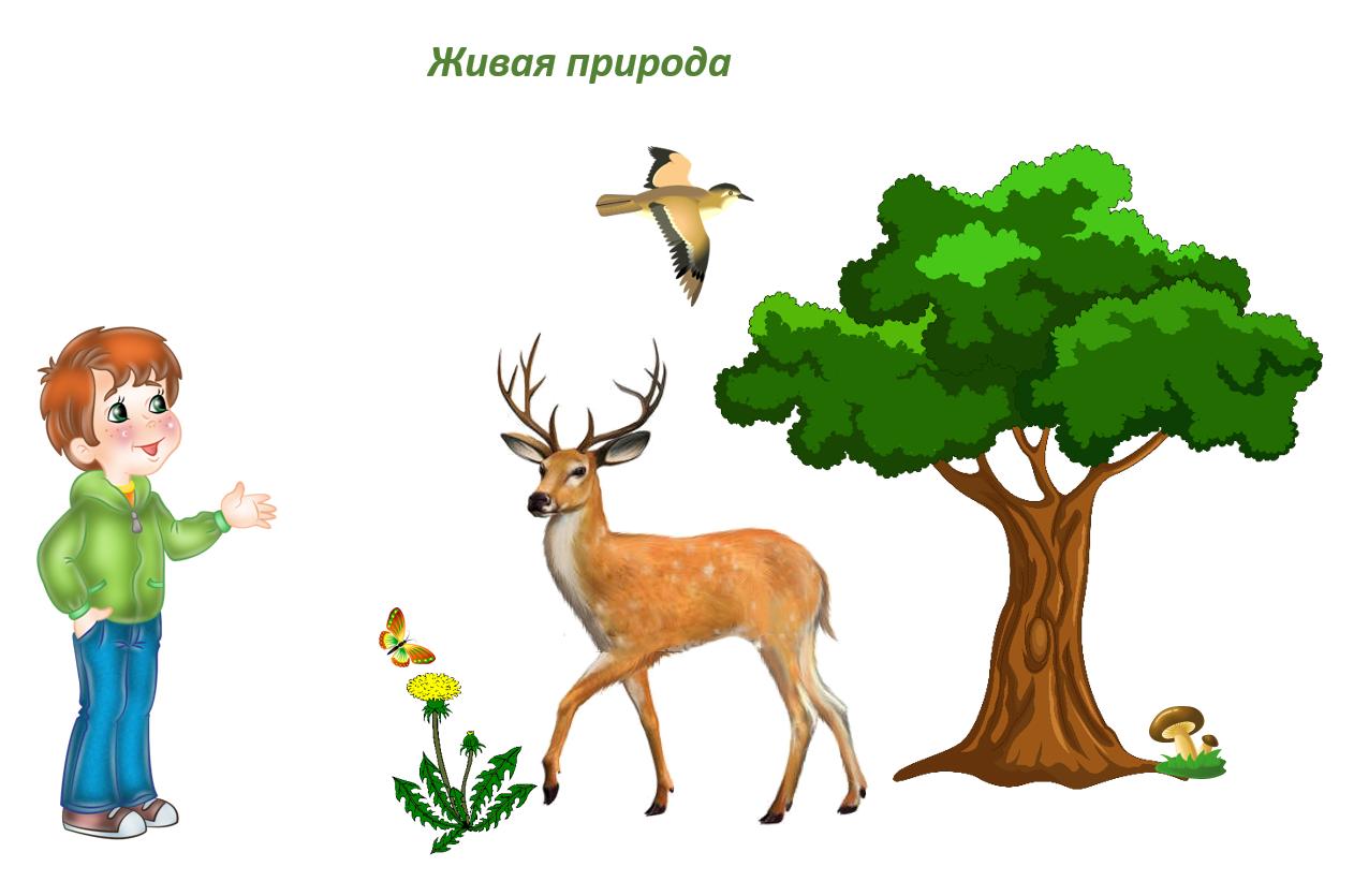Картинки для детского сада живая природа