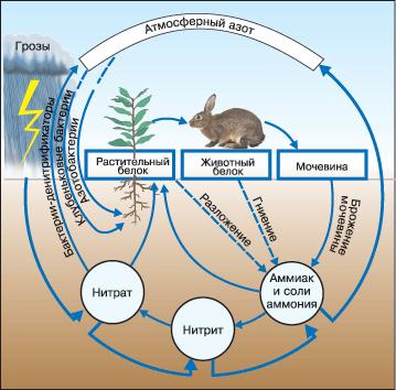 Схема циркуляции азота в