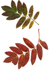 leaves-1021412_960_720.png