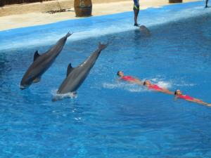 Dolphins_and_synchronized_swimming.jpg
