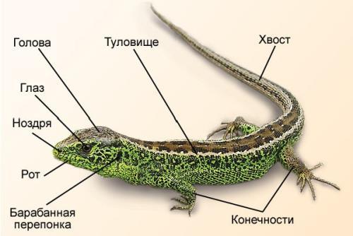Reptilia_6.jpg