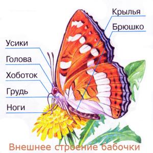 Image4957.png